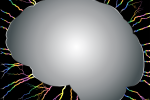 brain-1197344_960_720